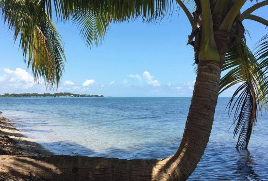 Image of bent palm tree growing on the shore.